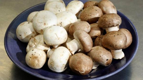 نرخ انواع قارچ و جوانه در میادین