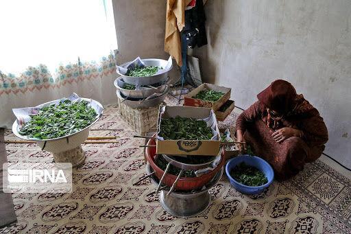 خبرنگاران 35 هزار میلیارد ریال وام به زنجیره کشاورزی خراسان شمالی اختصاص یافت